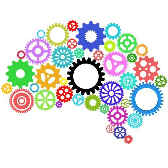 Forstå hjernens spilleregler og bliv en bedre global leder